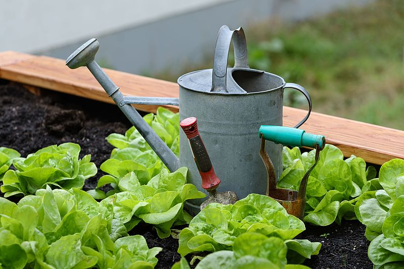 The Benefits Of Gardening as a Hobby