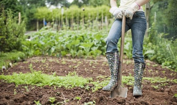 5 Best Hot Weather Gardening Shoes To Wear