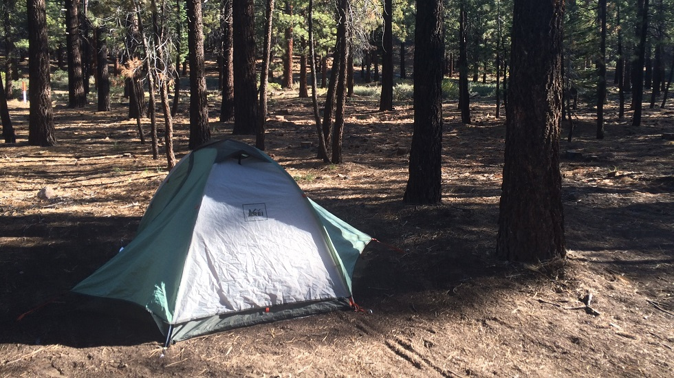 shady place in campground